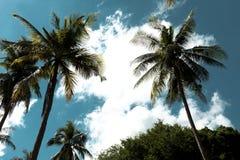 反对天空和云彩的椰子树 热带,夏威夷 库存照片