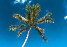 反对天空和云彩的椰子树 热带,夏威夷 库存图片