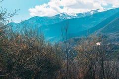 反对天空和山的树 免版税库存照片