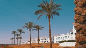 反对天空和旅馆的热带棕榈在埃及 旅馆外部在一个热带国家 影视素材
