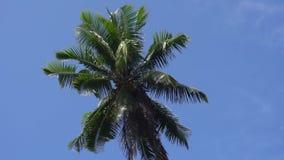 反对天空或海的棕榈树 股票视频