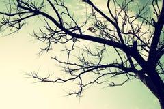 反对天空的不生叶的树枝 棒图象夫人减速火箭的抽烟的样式 免版税图库摄影