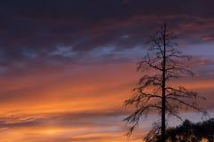 反对天空的偏僻的干燥树 免版税库存图片