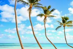反对天空的加勒比棕榈与云彩和水晶海水 免版税库存照片