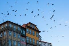 反对天空的历史的房子与一只海鸥在波尔图 免版税库存照片