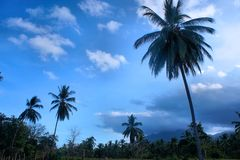 反对天空的可可椰子 热带的横向 免版税库存图片