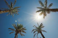 反对天空的四棵棕榈树 垂直的射击 免版税库存照片