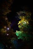 反对天空的夜树 免版税图库摄影