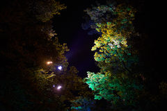 反对天空的夜树 免版税库存照片
