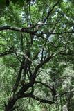 反对天空的强的树 库存照片