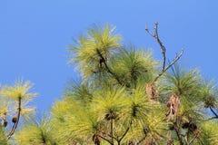 反对天空的树上面 库存图片