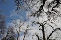 反对天空的树形成 库存照片