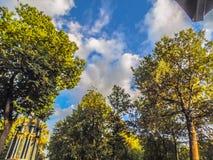 反对天空的树枝 库存图片
