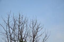 反对天空的树枝 免版税图库摄影