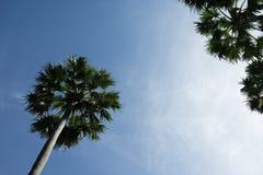 反对天空的棕榈树 免版税库存照片