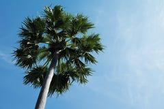 反对天空的棕榈树 免版税库存图片