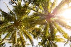 反对天空的棕榈树 图库摄影