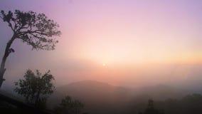反对天空的现出轮廓的树在日落期间 股票录像