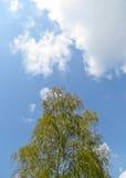 反对天空的白杨树 免版税库存照片
