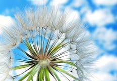反对天空的蒲公英种子与云彩 关闭 库存图片