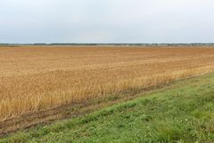 反对天空的金黄麦田在秋天 免版税图库摄影