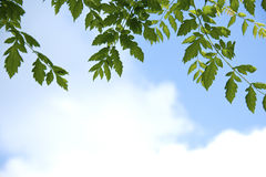 反对天空的绿色叶子 库存照片