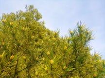 反对天空绿色桌面墙纸的树象分支 免版税库存照片