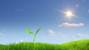 反对天空背景的生长植物 向量例证