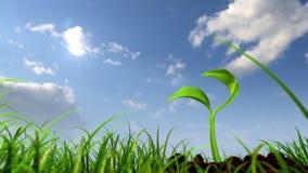 反对天空背景的生长植物 皇族释放例证