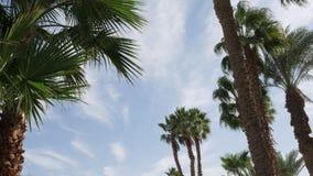 反对天空蔚蓝的棕榈树与浮动云彩 Timelapse 股票视频