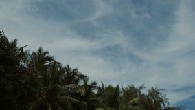 反对天空蔚蓝的棕榈树与白色云彩 股票录像