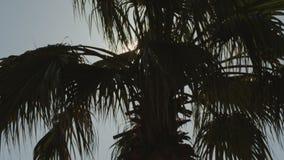 反对天空蔚蓝的棕榈树与白色云彩 股票视频