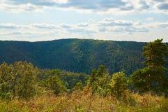 反对天空蔚蓝的美丽的绿色森林与云彩 自然公园 图库摄影