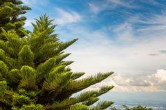 反对天空蔚蓝背景,新年假日的圣诞树 图库摄影