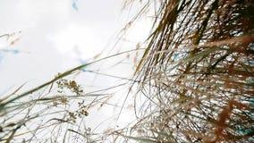 反对天空蔚蓝风景行动秋天的干草干燥反对在背景自然的天空蔚蓝分支 生活方式 股票视频