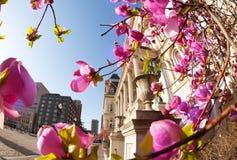 反对天空蔚蓝,MD,美国的巴尔的摩政府大厦 库存照片