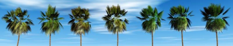 反对天空,热带全景的墨西哥棕榈树 免版税库存照片