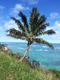 反对太平洋的夏威夷椰子树 免版税库存图片