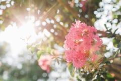 反对太阳的一朵桃红色花 免版税库存图片