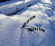 反对太阳的新鲜的雪与冻干植物和蓝色阴影 库存图片