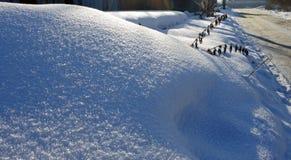 反对太阳的新鲜的雪与冻干植物和蓝色阴影 图库摄影