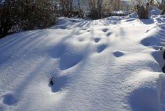 反对太阳的新鲜的雪与从脚印的蓝色阴影 库存照片