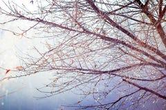 反对太阳的木纹分支在早期的spring_ 免版税图库摄影