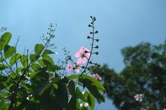 反对太阳的花 库存照片