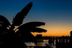 反对太阳集合天空背景的芭叶子剪影  免版税库存照片