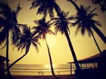 反对太阳,葡萄酒减速火箭的样式的棕榈剪影 免版税库存照片