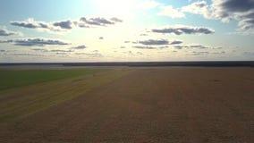 反对密集的森林的美妙的鸟瞰图成熟麦田 股票视频