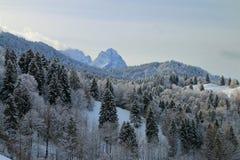 反对山峰背景的积雪的森林  免版税库存图片