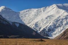 反对山的背景的土拨鼠 免版税库存图片