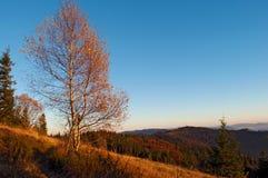 反对山脉的小山的一个桦树 免版税库存照片